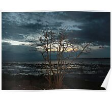 Stand alone tree at sunset  Poster