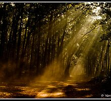 Morning Rays! by Varun Chopra