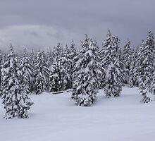 early winter by shawnmanji