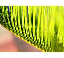 Green ribs Photographic Print
