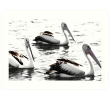 Pelicans on the water Art Print