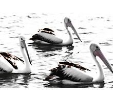 Pelicans on the water Photographic Print