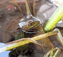 froggy green for the love of nature 2 by Barberelli