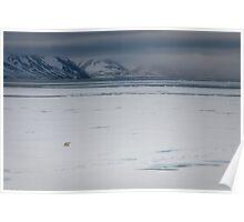 Polar bear on Ice (Woodfjord - Svalbard) Poster