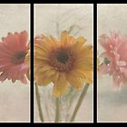 All In A Row - Triptych by Sue Martin