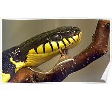 lazy snake Poster