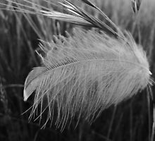 Feathered Grass by Georgie Hart