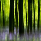 Impressions of a bluebell wood by Martin Griffett