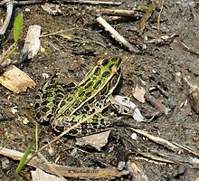 froggy green for the love of nature 5 by Barberelli