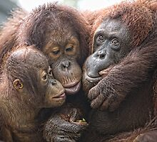 Buddies by Anne Young