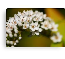 White bower Canvas Print