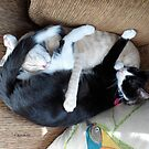 Adorable Sleepy Time Loveable Cats Snooze by Barberelli