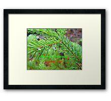 Spruce Bow, Rain Drop ,Christmas Card Framed Print