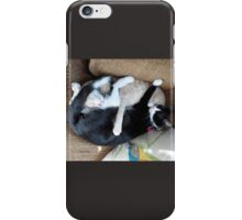 Adorable Sleepy Time Loveable Cats Snooze iPhone Case/Skin