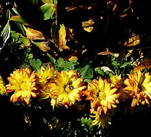 Autumn Flowers by Barry W  King