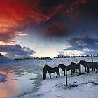 Iceland - power of magic by Patrycja Makowska
