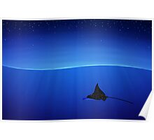 Spotted eagle ray, Aetobatus narinari Poster