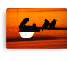 early morning streetlight with rooks Canvas Print