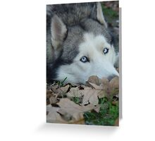 Leaves and Fall Husky Season Greeting Card