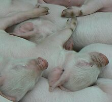 Piglets sleeping by constantchaos