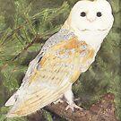 Barn Owl by lissygrace
