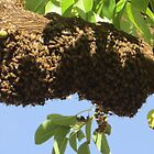 Bee swarm by MariaSG