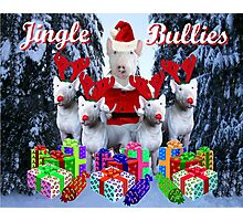 Jingle Bulls Jingle Bulls Photographic Print