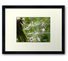 Dandelon Clocks Framed Print