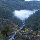 canyon fog by jessica campbell
