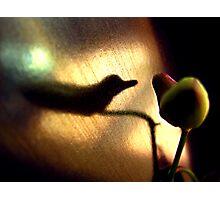 halcyon bird Photographic Print