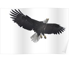 Feathers for Flight - American Bald Eagle Poster