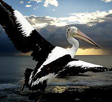 """Pelican Dawn"" by Mike Larder"