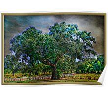 The Ole Oak Tree Poster