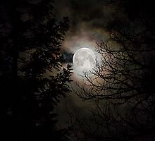 full moon by Jeannie Peters