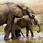 Elephants - Tarangiri National Park, Tanzania by timstathers