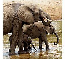 Elephants - Tarangiri National Park, Tanzania Photographic Print