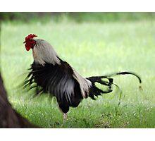 Chicken Dance Photographic Print