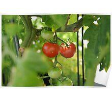 couple tomato Poster