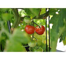couple tomato Photographic Print