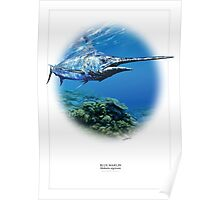BLUE MARLIN POSTER 1 Poster