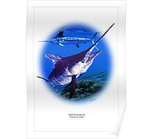 WHITE MARLIN POSTER 2 Poster