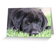 Sleepy 'Butch' Greeting Card