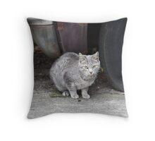 Grey Stray Throw Pillow