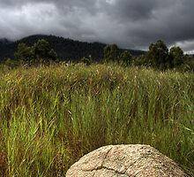 creeping through the grass by Joel Wigley