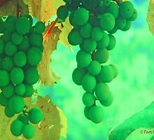 Chardonnay by Pam Moore