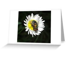 daisy and the fly Greeting Card