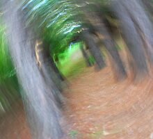 Blurred forest view by Speedy