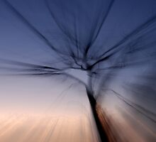Zoomed tree at dusk by Speedy