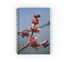Signs of Spring - 1 Spiral Notebook
