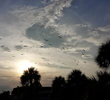 Sunset with palms and birds by jjurm